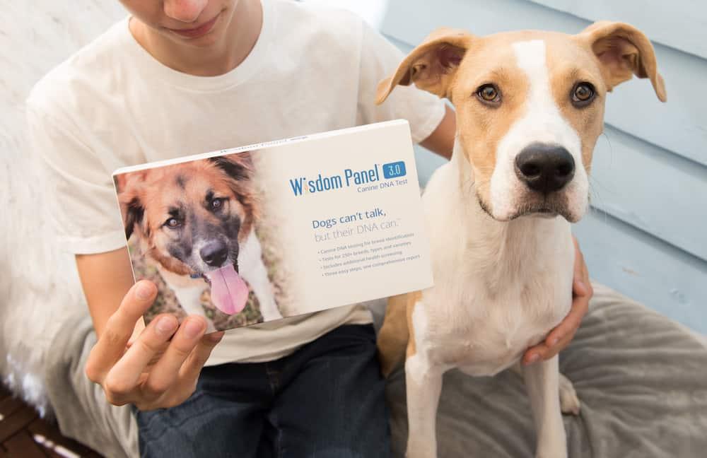 Best Dog DNA Kits