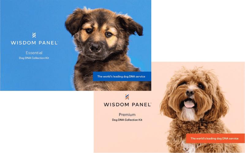 Wisdom Panel Dog DNA Kits