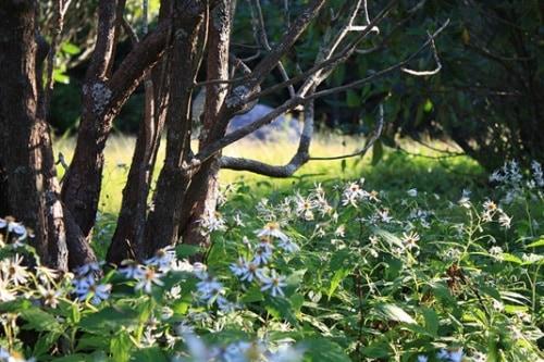 trees-flowers